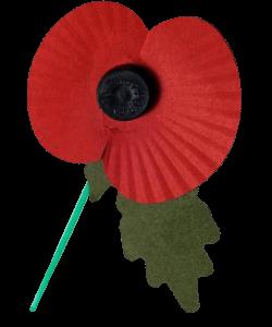 Image of poppy